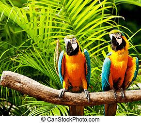 papagaio, sentando, pássaro, poleiro, colorido