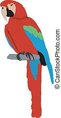 papagallo