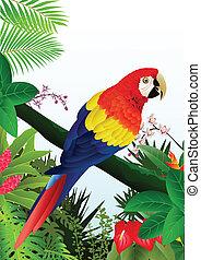 papagallo, pájaro, bosque, tropical