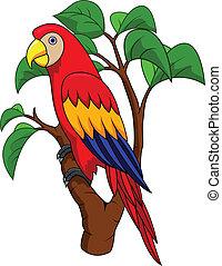 papagallo, pájaro, caricatura