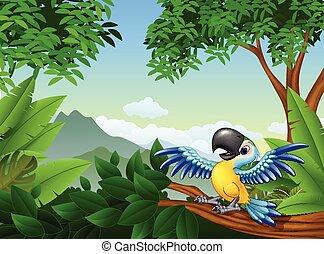 papagallo, selva, caricatura