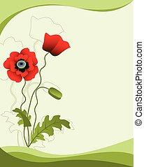 papavero, fiore, verde, isolato, fondo