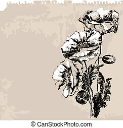papavero, fiori, grunge, fondo