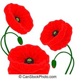 papavero, fiori, scheda, rosso