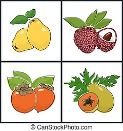 Papaya, Persimmon, Quince, Lichee , Isolated on White...