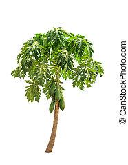 Papaya tree (Carica papaya) also known as Papayas, Papaw, ...