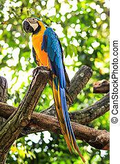 papegøjer, branch, siddende