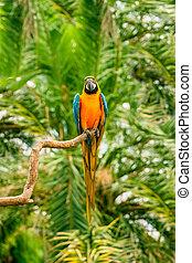 papegøjer, macaw, branch, siddende