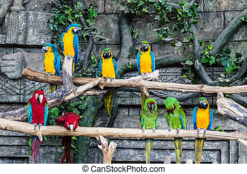papegøjer, macaw, fugl, branch, his