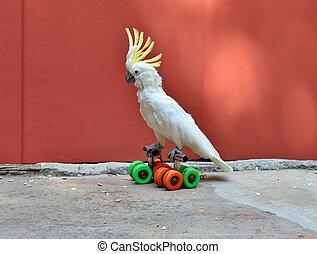 papegaai, op, broodjes