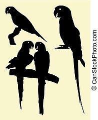 papegaai, silhouettes, dier, 01.