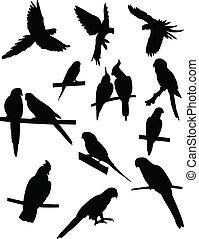 papegaaien, verzameling