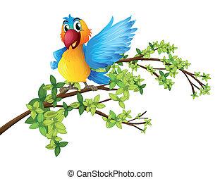 papegoja, filial, färgrik, träd