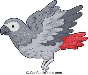 papegoja, grå, illustration