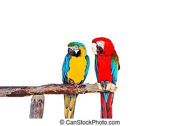 papegojor, två