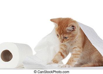 papel higiénico, gatito