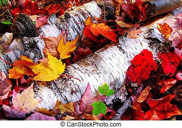 papel, hojas, arce, abedul