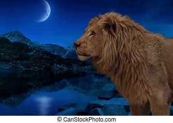 papel parede, lago, lua, leão, estrelas, noturna, sob