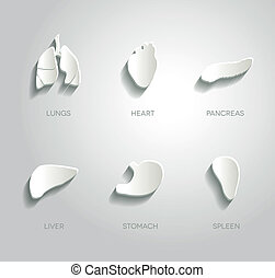 Paper anatomy - Human organs illustrations set, abstract ...