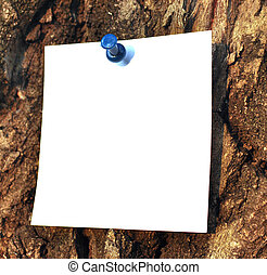 paper attached to krone of a tree