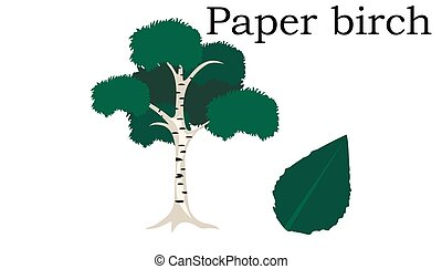 Paper birch Trees vector element. vector icon