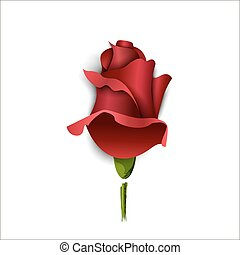 Paper burgundy rose on a white background. Greeting card....