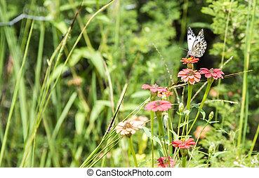 paper butterfly in garden