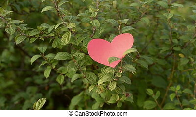 Paper heart falling from a bush
