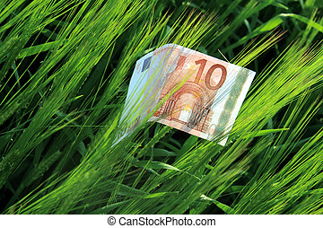 Paper money - paper money on barley field. Food for money,...