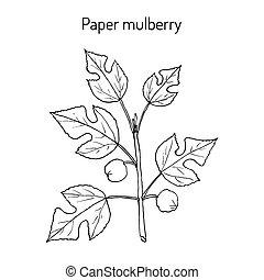 Paper Mulberry Broussonetia papyrifera , medicinal plant....
