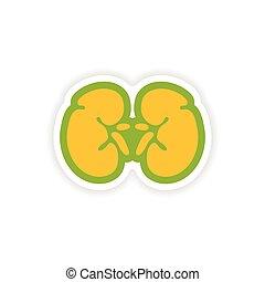 paper sticker on white background human kidney