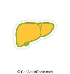 paper sticker on white background human liver