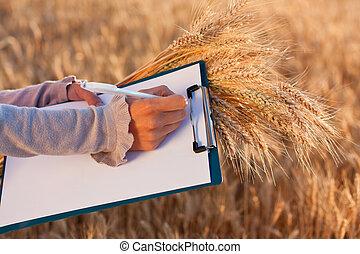 paperasserie, blé, femmes, stylo, mains, vide, oreilles