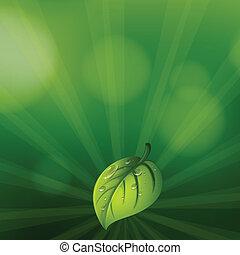papeterie, feuille verte, coloré