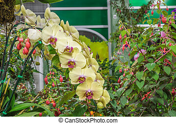 Paphiopedilum orchidaceae flower - Paphiopedilum orchidaceae...