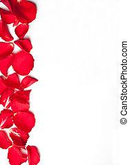 papier, achtergrond, roos