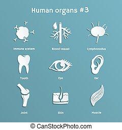 papier, ensemble, organes, humain, systèmes, icônes