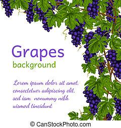 papier peint, raisins, fond