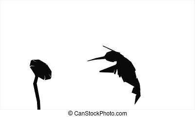 papier, silhouette, colibri