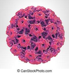 papillomavirus, menschliche , lightl, hintergrund