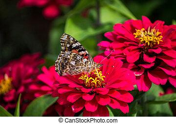papillon, été, fleurs roses