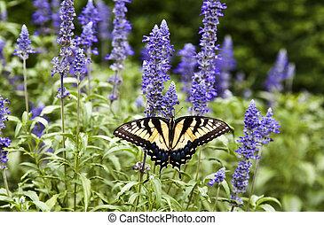 papillon, été, vert, nature