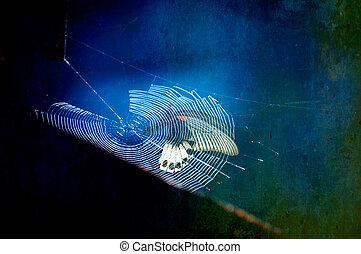 papillon, être, attrapé, toile araignée