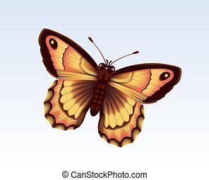papillon, 10