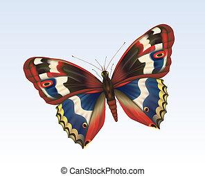 papillon, 11