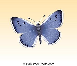 papillon, 3