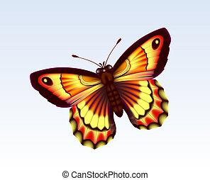 papillon, 6