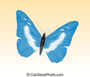 papillon, 8
