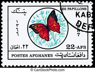 papillon, afghanistan, environ, -, 1987