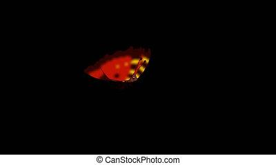 papillon, alpha, mouches, red-striped, fait boucle